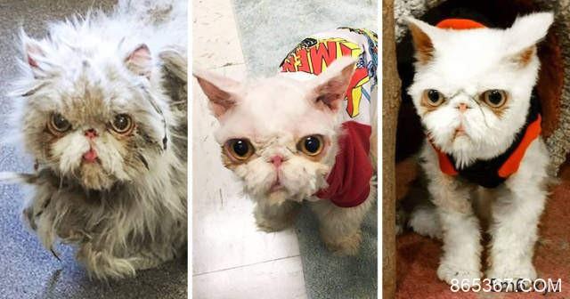 宠物也是有情绪 宠物被领养前后表情不一样